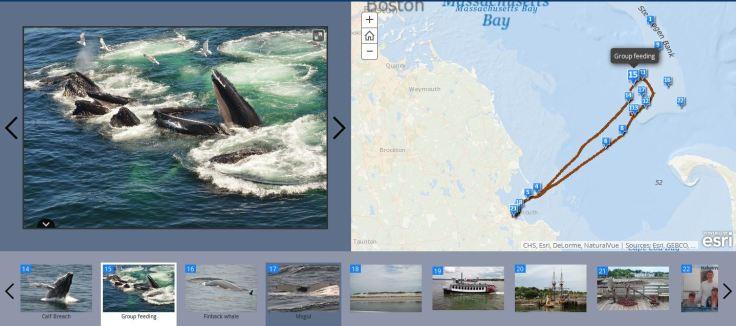 WhaleWatchingMap