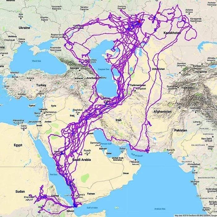 gps-tracks-eagle-movement-over-twenty-years-5c79333418b97__700
