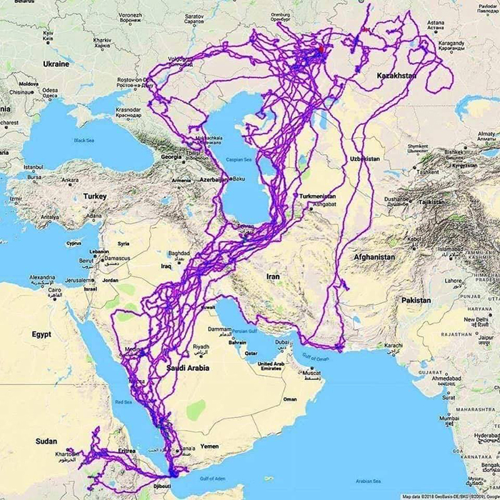 gps-tracks-eagle-movement-over-twenty-years-5c79333418b97__700