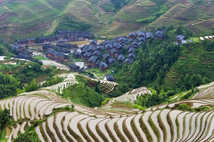 rice china